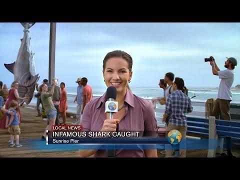 Sharknado Week vs. Shark Week