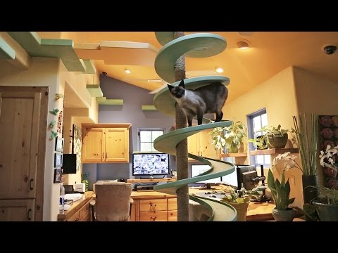 Check Out the Cat Paradise in This House!