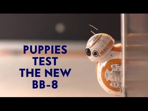 BB-8 VS Adorable Puppies!