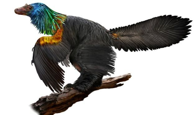 Scientists Discover Fossil of Dinosaur With Iridescent Feathers