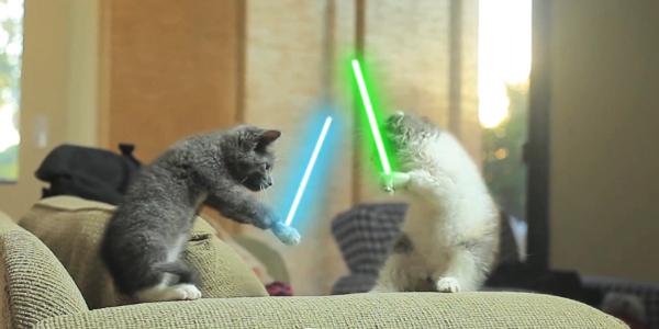 Jedi Kittens!