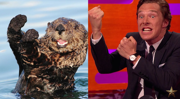Benedict Cumberbatch Does Otter Impressions on The Graham Norton Show and Brings Joy to the World