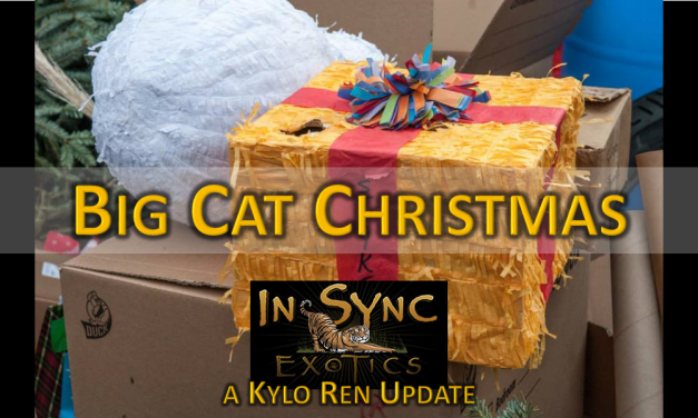 Animal Sanctuary Update: Kylo Ren and Kenobi Get an Early Christmas Gift