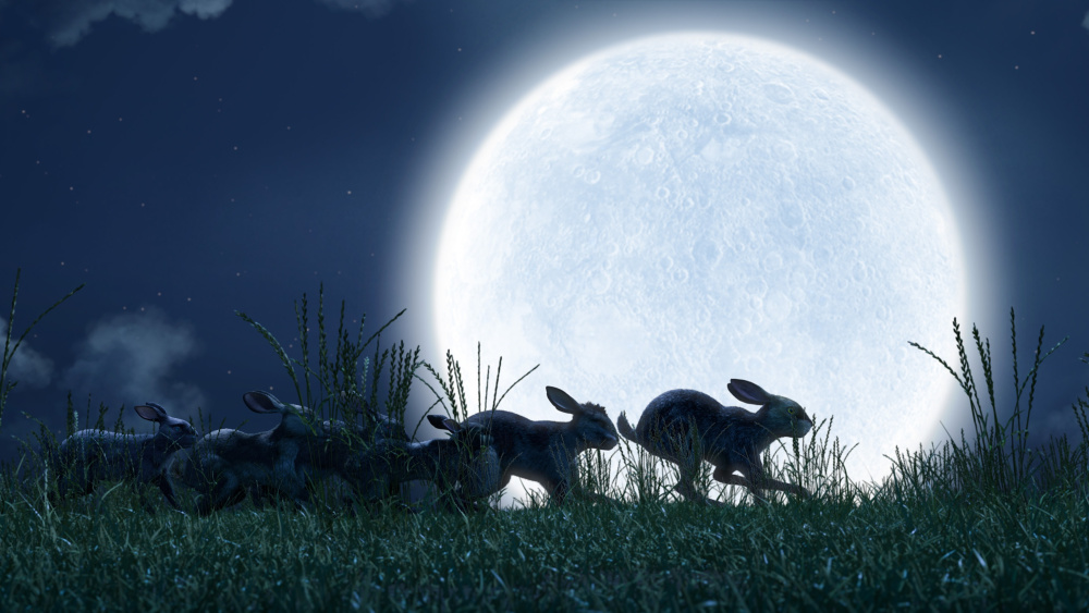What to Expect from BBC's WATERSHIP DOWN This Christmas
