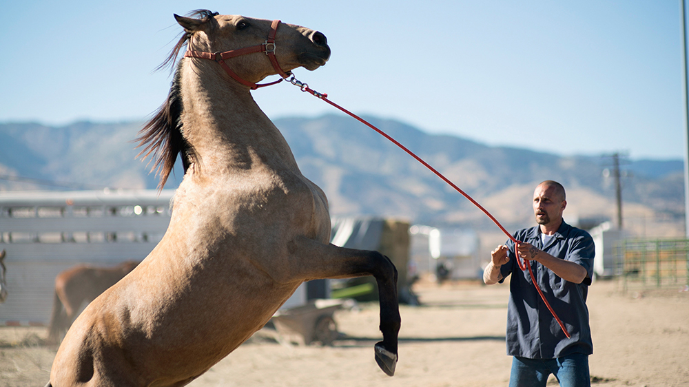 Movie Review – THE MUSTANG