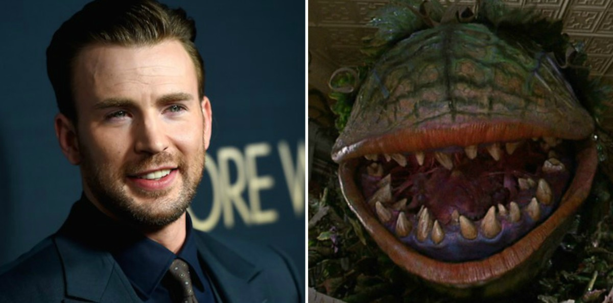 Chris Evans in Negotiations to Join LITTLE SHOP OF HORRORS Cast