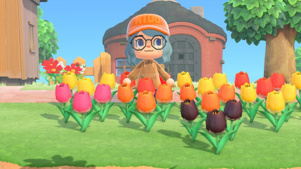 Me showing off my hybrid pink,orange and black tulips in ACNH.
