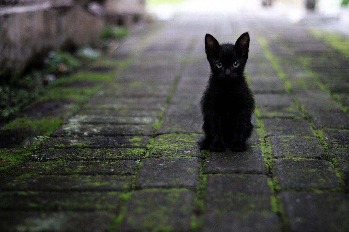 black kitten sitting