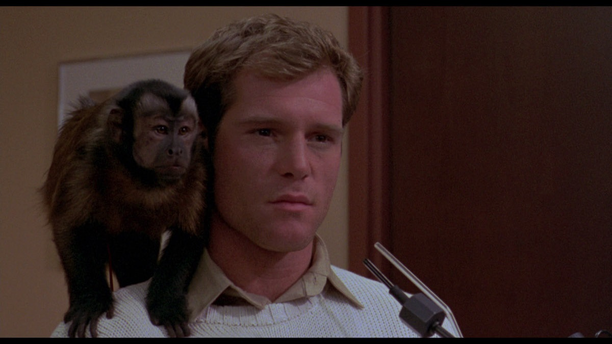 Still from horror film Monkey Shines.